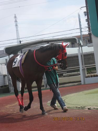 IMG-c_7447.JPG