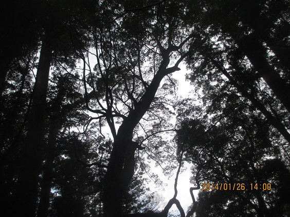 IMG_c0296.jpg