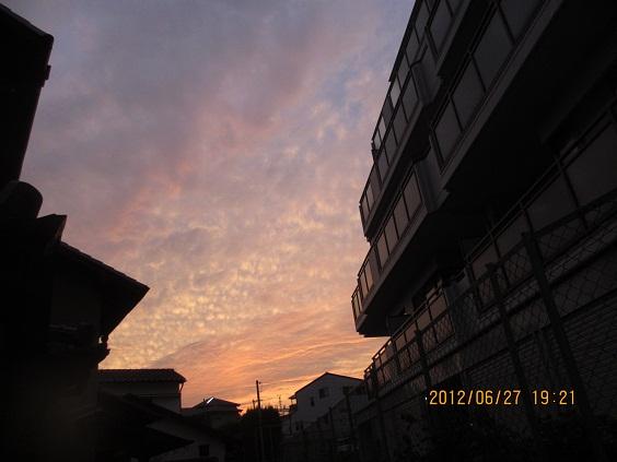 IMG_c1270.jpg